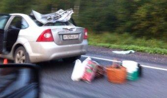 В ЛенОбласти произошло столкновение легкового автомобиля с лосем