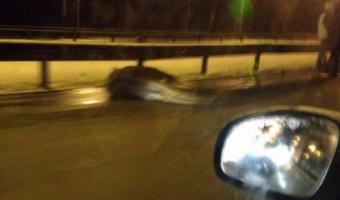 В Петербурге на КАД автомобиль сбил лося