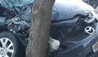 В Пестовском районе автомобиль врезался в дерево: погибла женщина