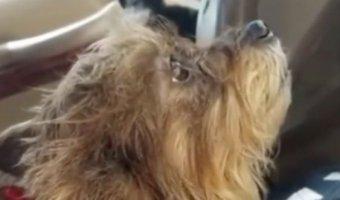 В США собаки угнали автомобиль у хозяйки и врезались в стену магазина