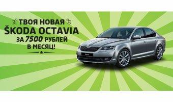 SKODA Octavia в Атлант-М Тушино за 7500 рублей в месяц!