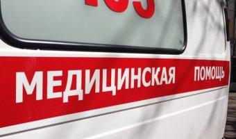В ДТП с лосем в Ленобласти тяжело пострадал водитель