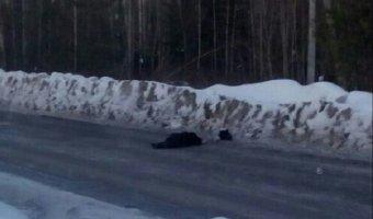 В Усть-Илимске разыскивают водителя, насмерть сбившего женщину
