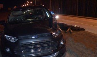 Под Казанью на темной трассе водитель Ford не заметил и сбил лося