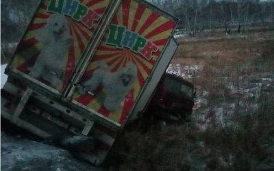 Цирковые животные погибли в ДТП под Челябинском