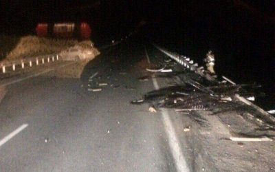 Два человека погибли в ДТП с лосем в Кемеровском районе