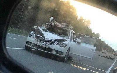 Водитель иномарки погиб в ДТП с лосем в Ленобласти