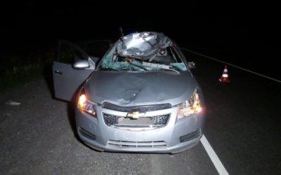 Женщина погибла в ДТП с лосем на трассе Екатеринбург — Каменск-Уральский
