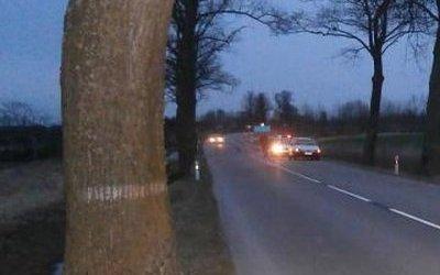 Автомобиль врезался в дерево в Ростовской области – погибли два человека