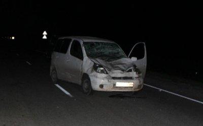 В ДТП с коровой в Новосибирской области погибла пассажирка иномарки