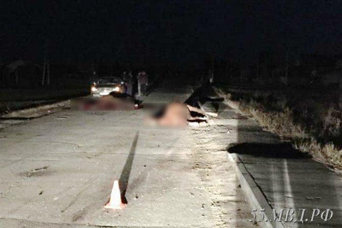 Под Омском водитель насмерть сбил двух лошадей (2)