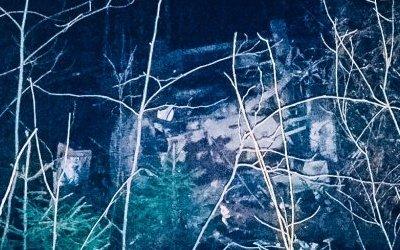 В Ленобласти иномарка врезалась в дерево – водитель погиб