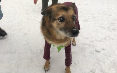 Сотрудники ŠKODA АВТОРУСЬ БУТОВО посетили приют для собак