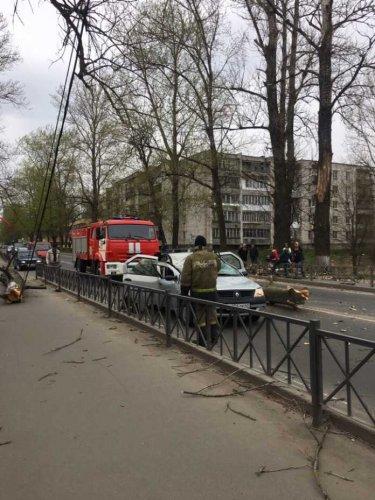 В Волхове дерево упало на машину – погибла женщина (1)