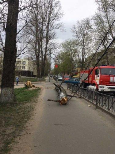 В Волхове дерево упало на машину – погибла женщина (2)