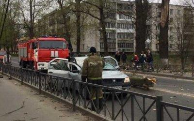 В Волхове дерево упало на машину – погибла женщина