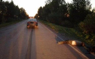 В Тверской области насмерть сбили мужчину