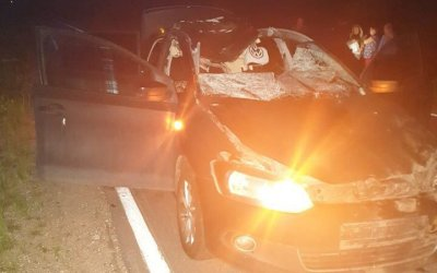 В Ленобласти в ДТП с лосем погиб человек