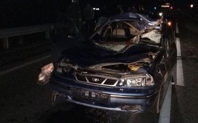 Молодой водитель погиб в ДТП с лосем в Свердловской области