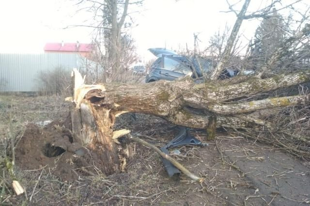 В ДТП в Тверской области погибли оба водителя (1)