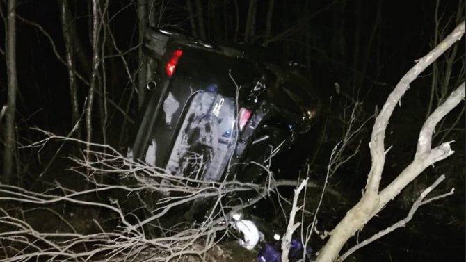 В ДТП с лосем под Череповцом пострадал водитель