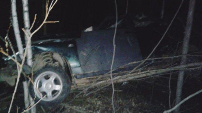 В ДТП с лосем в Ленобласти погиб человек