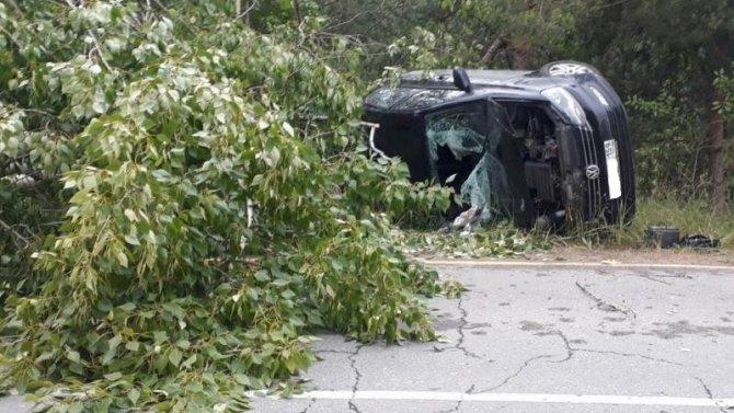 В Пермском крае иномарка врезалась в дерево – погибла женщина