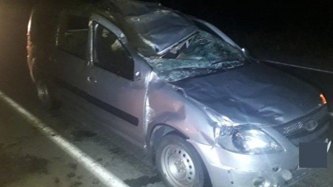 Три человека пострадали в ДТП с лосем в Свердловской области