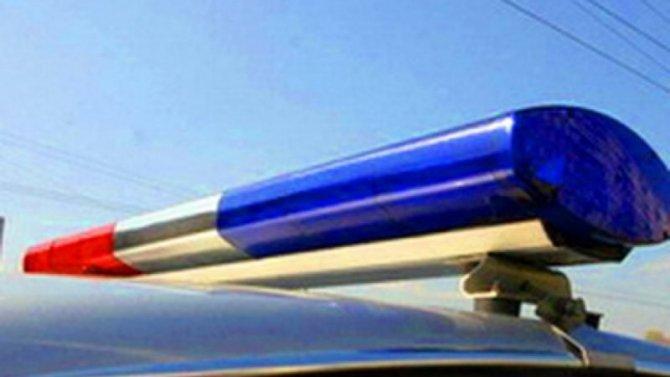 В Красноярском крае в ДТП с лосем погибли два человека