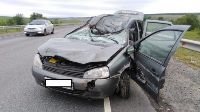 Водитель погиб в ДТП с лосем в Саратовской области