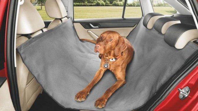 ŠKODA рассказала, как безопасно путешествовать с домашними животными в автомобиле
