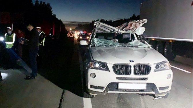 В Екатеринбурге в ДТП с лосем погиб водитель автомобиля