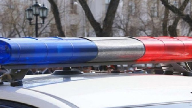 В ДТП с лосем в Удмуртии погибла женщина