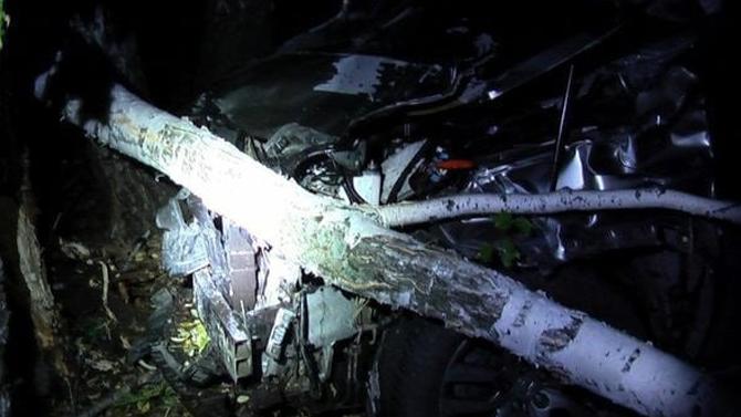 ВСамарской области наночной трассе под колёсами «Лексуса» погиб лось